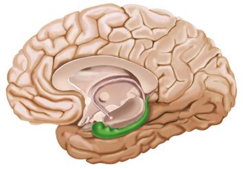 Hippocampus headline: lo slogan che sorprende il cervello